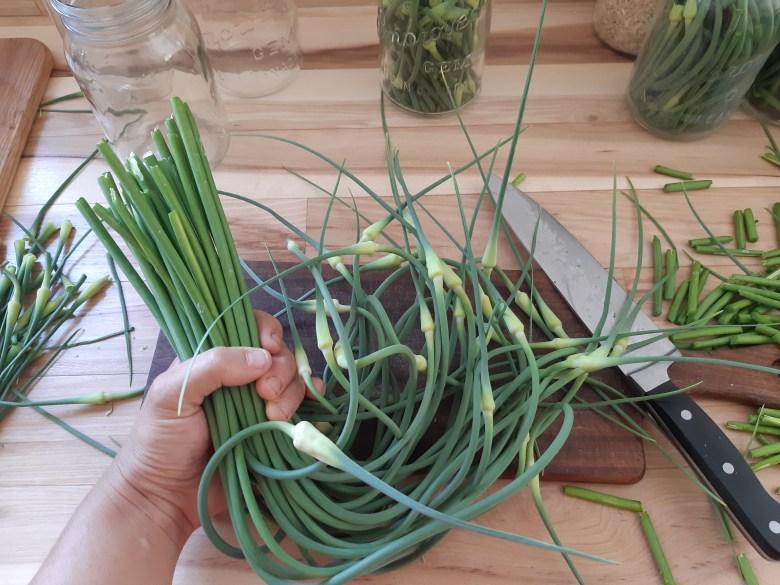 pickled garlic scapes recipe