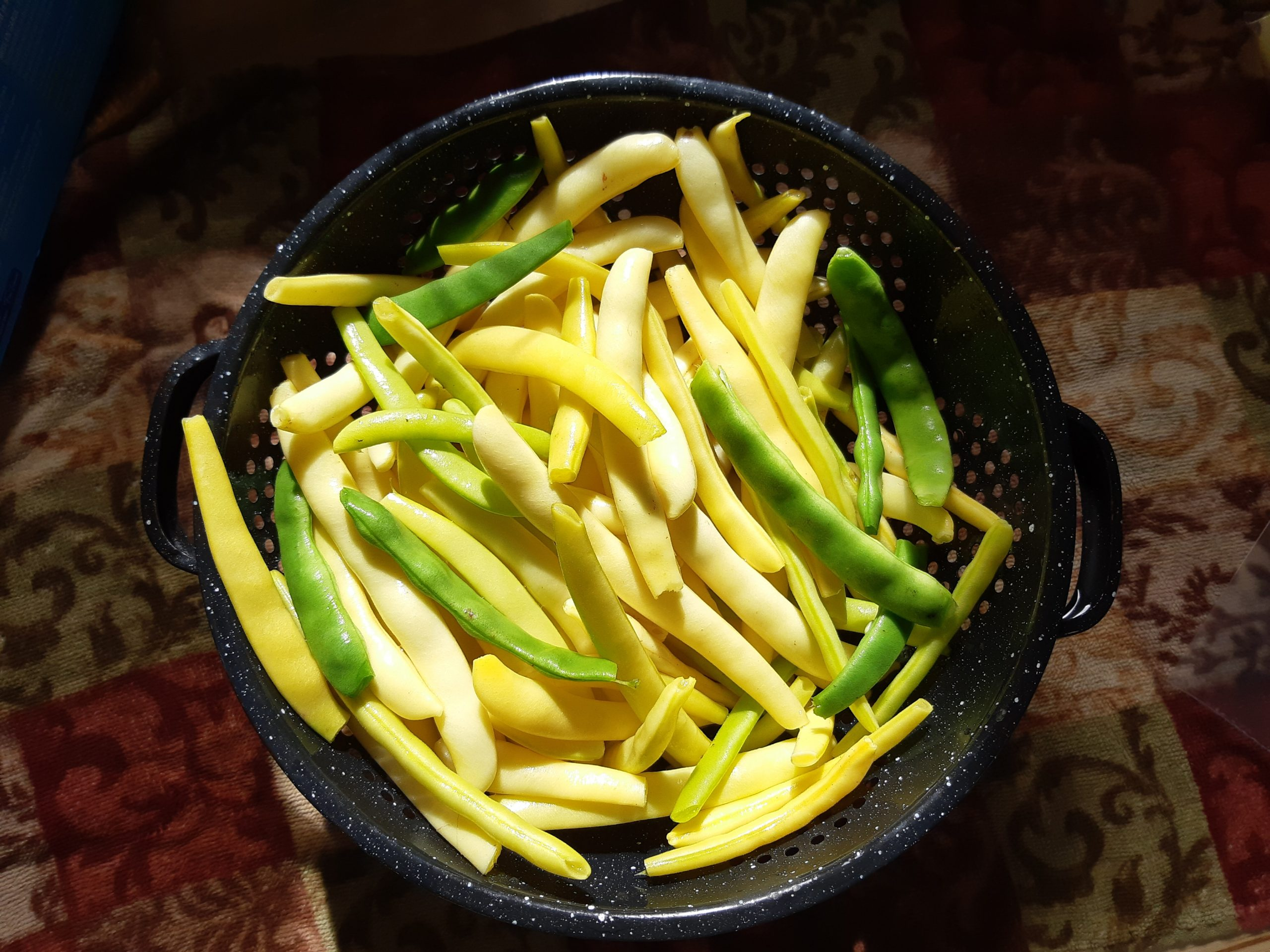 Freezing Snap Beans the Easy Way
