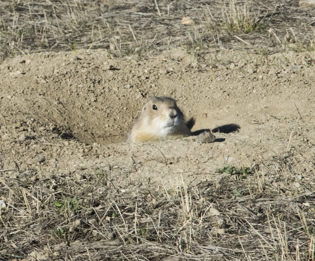 The Winner of the AppSnax Book Giveaway, plus Coyotes, Prairie Dogs and Colorado's Open Spaces