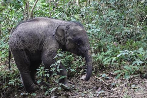 baby elephant at MandaLao in Luang Prabang, Laos
