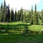 alpine fir photo