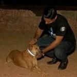 Saving Stray Dogs, Tying reflective collars