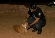 Saving Stray Dogs, Tying reflective collars