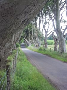 Dark Hedges 5