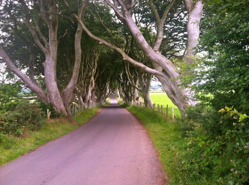 Dark Hedges curve