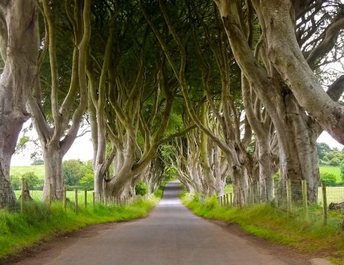 dark hedges lighter