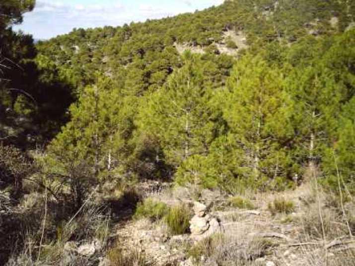 Bosques del Revolcadores