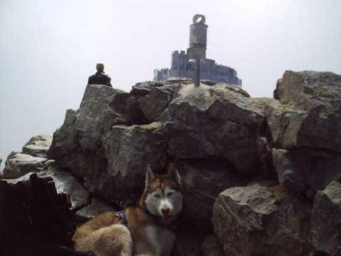 husky en los Pirineos
