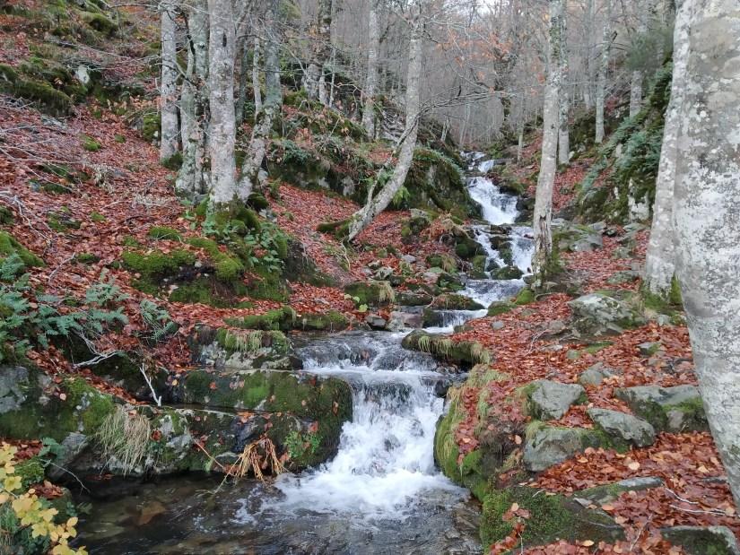 el río salta a cada paso