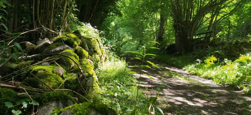 Bosques con musgo