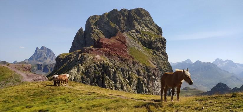 Caballos Pirineos
