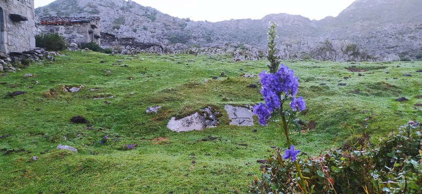 Prados en Picos de Europa