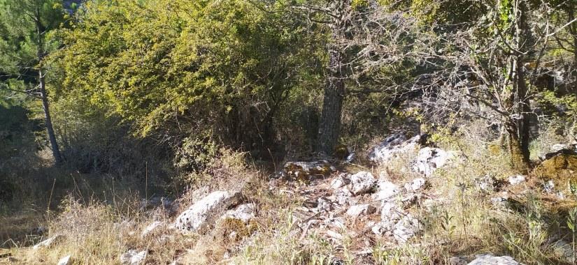 Bosque en la ruta