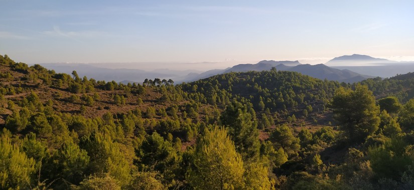 Bosques de Alicante