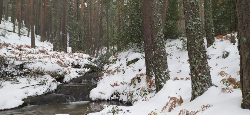 Ruta por Bosques de Rascafría