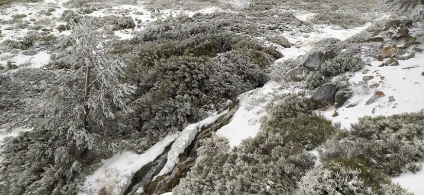 Piornos nevados