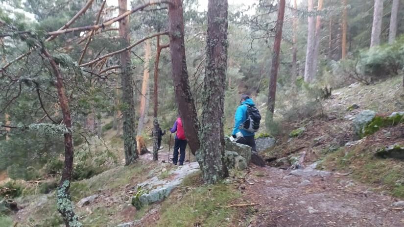 Pasando por un bosque