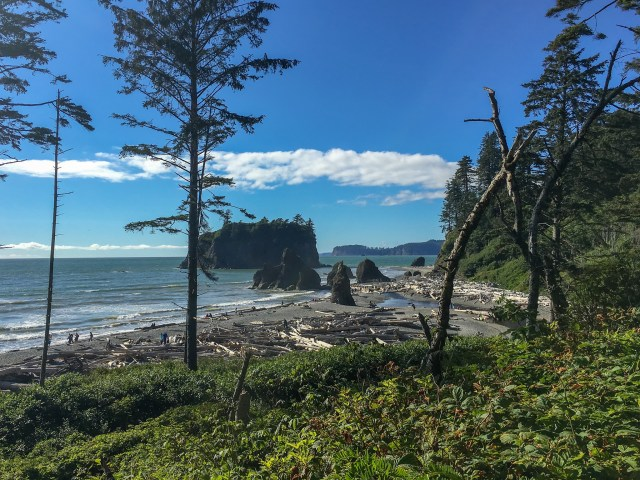 Looking out at Ruby Beach, with driftwood and sea stacks on a clear, sunny day