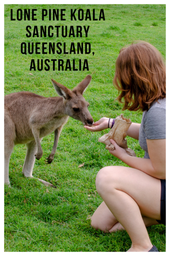 "Woman feeding kangaroo with text ""Lone Pine Koala Sanctuary Queensland Australia"