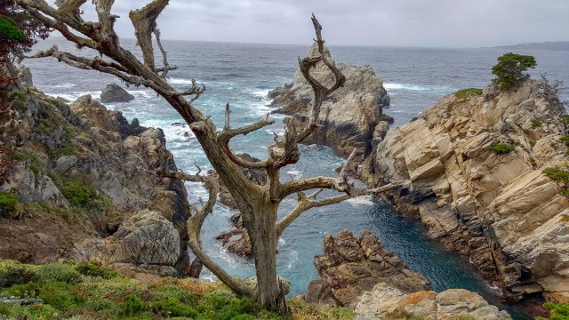 Tree branches shaped by wind, located in front of swirling ocean and craggy cliffs