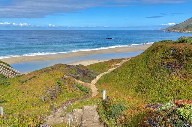 Looking from steps that lead down to a beach, with pops of color from wildflowers dispersed through greenery