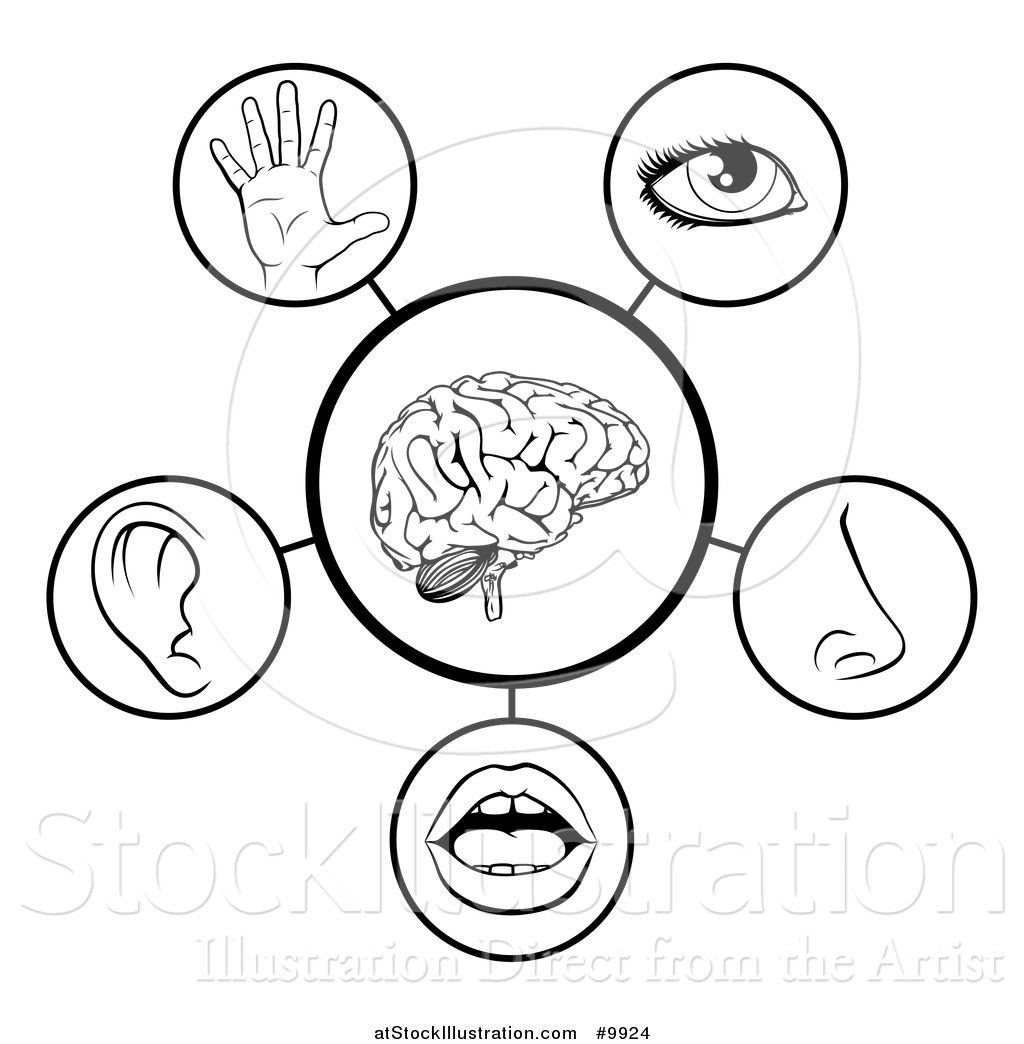 five senses diagram fuzz face wiring vector illustration of 5 human black and white