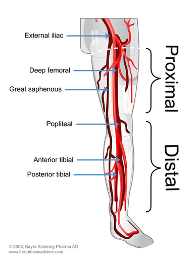 vascular anatomy diagram lower trane wiring diagrams extremity vasculature picture dvt s the most common sites for are in popliteal femoral and iliac veins