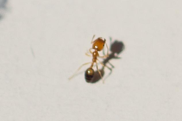 我家螞蟻會咬人(附圖) - Mobile01