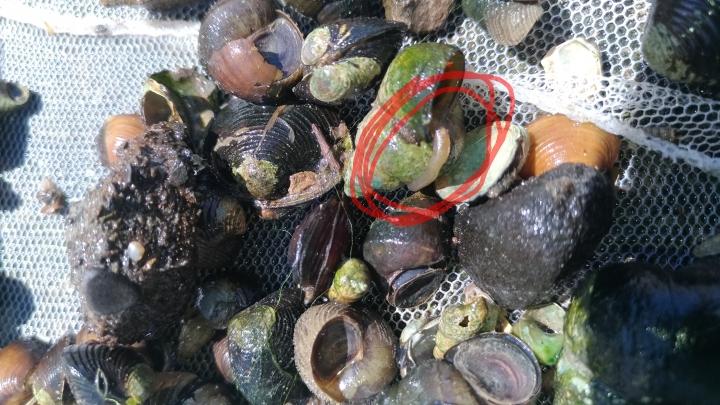 水溝撈的一些魚,螺,水蛭? - Mobile01