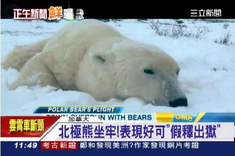 家門外有熊! 小鎮創北極熊監獄自保 | 國際 | 三立新聞網 SETN.COM