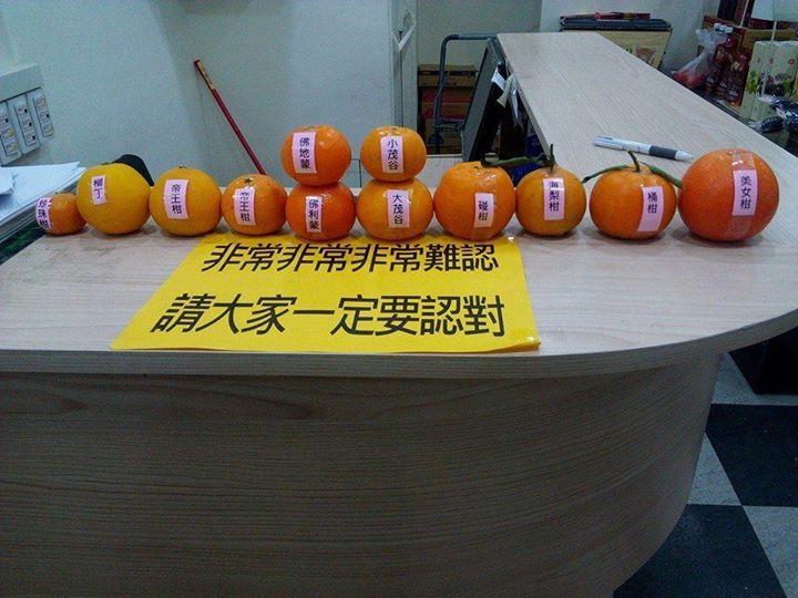真的分不出來啊!橘子品種竟然這麼多 其中一顆是....   生活   三立新聞網 SETN.COM