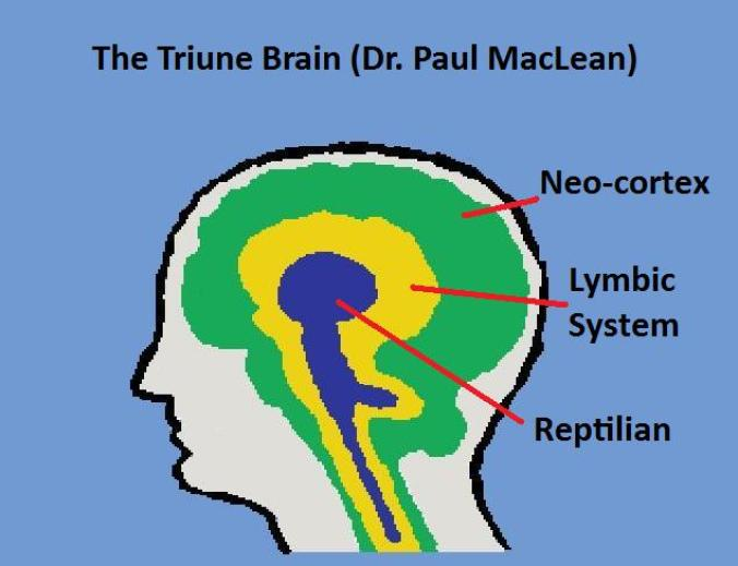 Triune Brain Theory