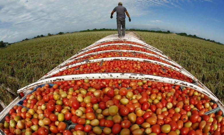 السيادة الغذائية في الجزائر