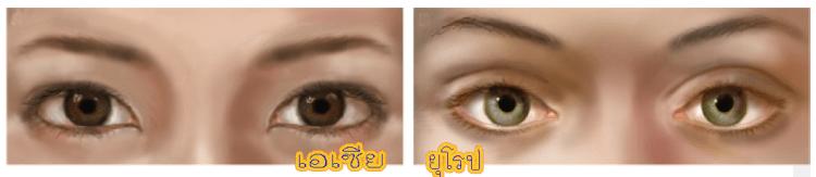 ลักษณะตาคนเอเชีย ไม่มีชั้นตา กับคนยุโรป จะมีชั้นตาชั้น
