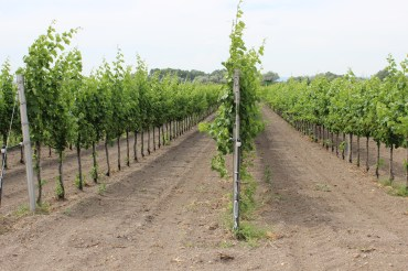Neusiedlersee-Seewinkel is not owned by any government but rather by around 1,200 different owners. Most of them are local farmers that receive a yearly compensation for leaving these plots unused. Still you can see many vineyards around the area.