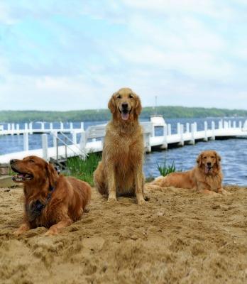 Buddy, Packer, Maya