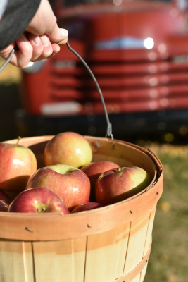 This guest got quite the apple bounty on their trip to the orchard!