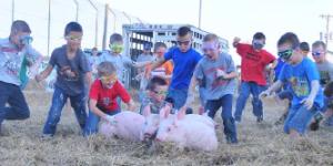 Pig Scramble @ Grandstands