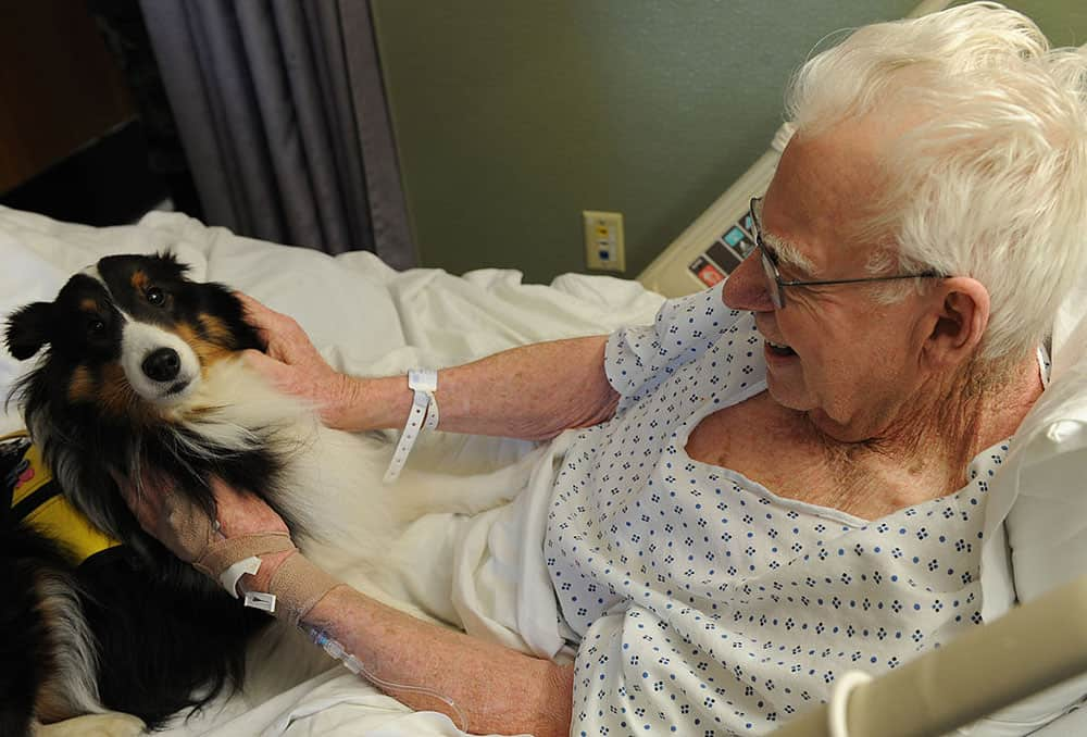 therapy dog image