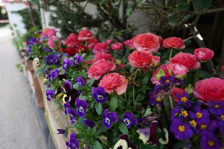 beautiful flowers in tivoli