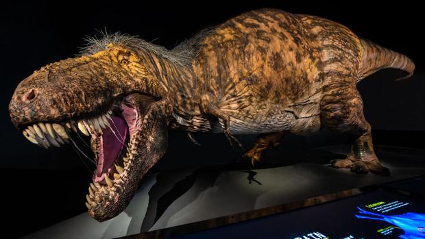 world's most accurate T. rex model New York Natural History