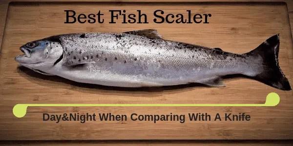 Best Fish Scaler