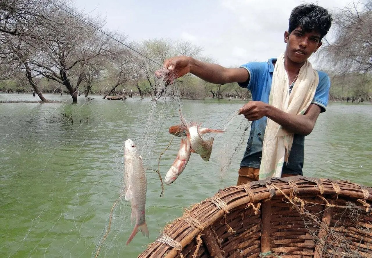 Coracle Nets