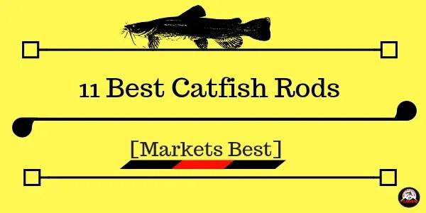 Best Catfish Rods