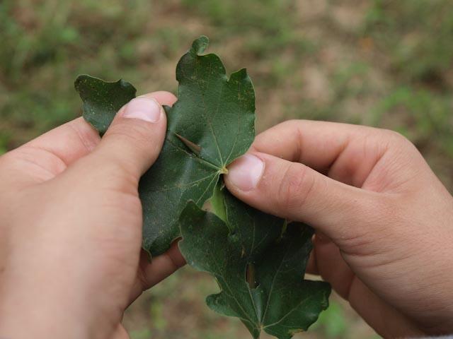 Con spine e foglie