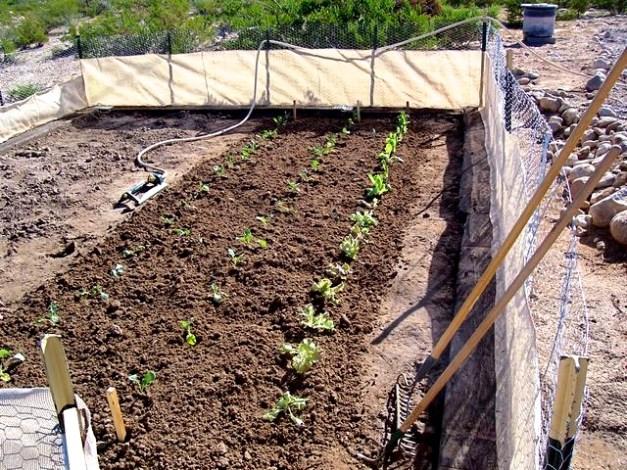 Desert gardening 2