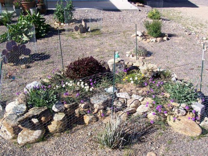 Desert gardening 4