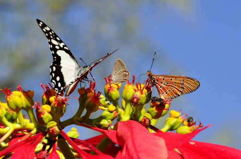 beautiful-butterflies