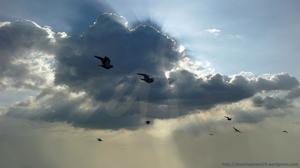 pigeons flying free as clouds overcast the sun