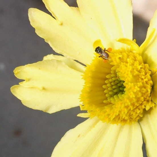 Tiny fly buzzing over a flower